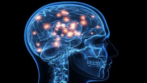 no-two-brains-are-alike-investigation-reveals-494462-2